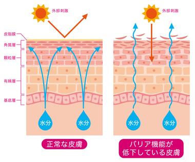 紫外線 肌 バリア機能